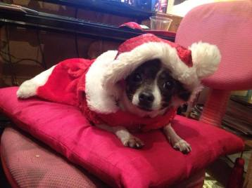 chiquita fiesta navidad